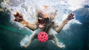 cachorro-nadando