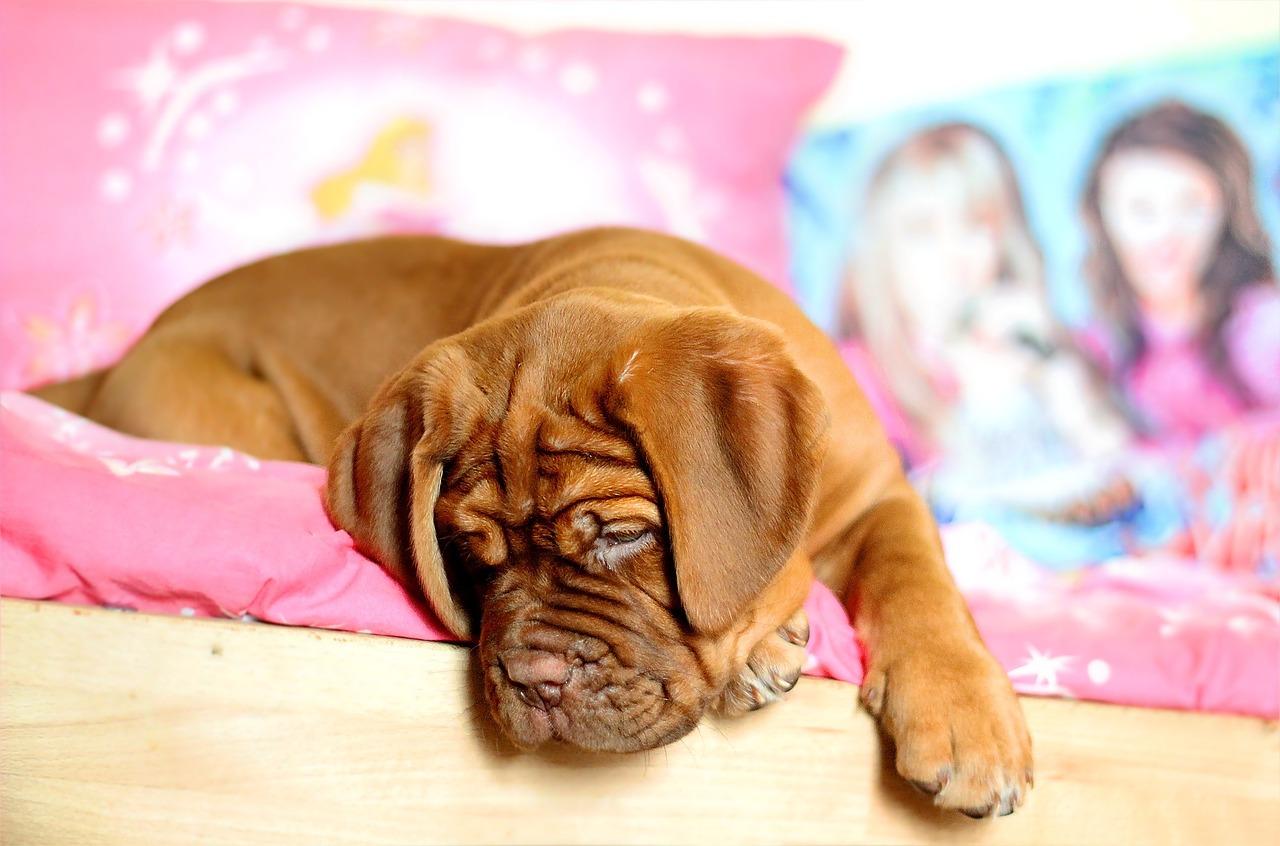 doenças-comuns-cachorro