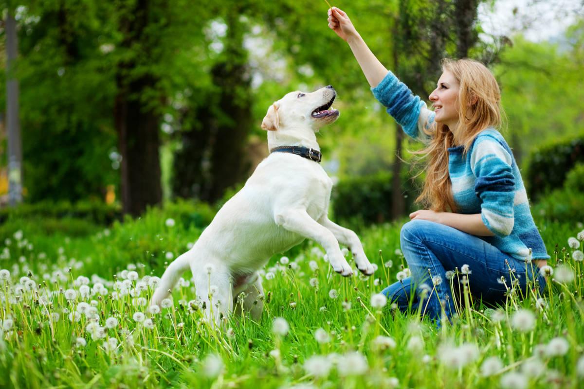 adestrar-cachorro