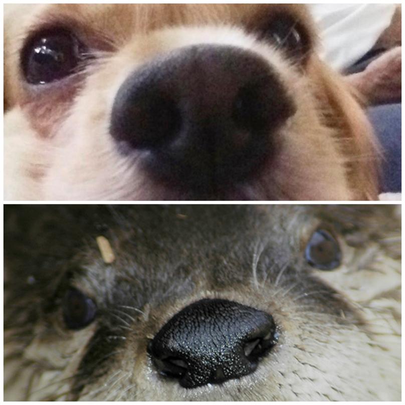 animais-com-seus-sósias-15