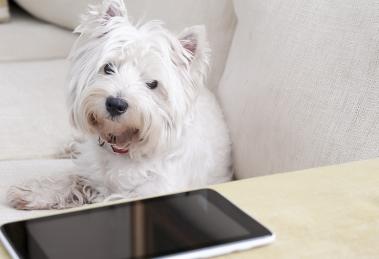 aplicativos-que-te-ajudam-a-cuidar-do-seu-cão