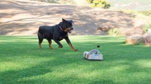 cachorro-com-carrinho-de-controle-remoto