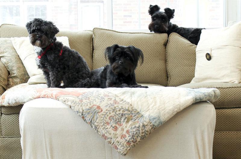 cachorro-no-sofa