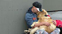 Cachorros não se importam com bens materiais
