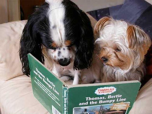 cachorros-com-seus-livros-13