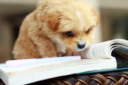 cachorros-com-seus-livros-14