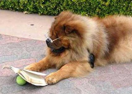 cachorros-com-seus-livros-17