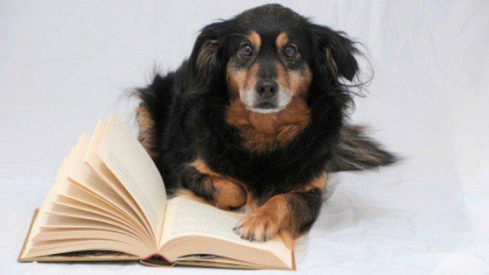 cachorros-com-seus-livros-18