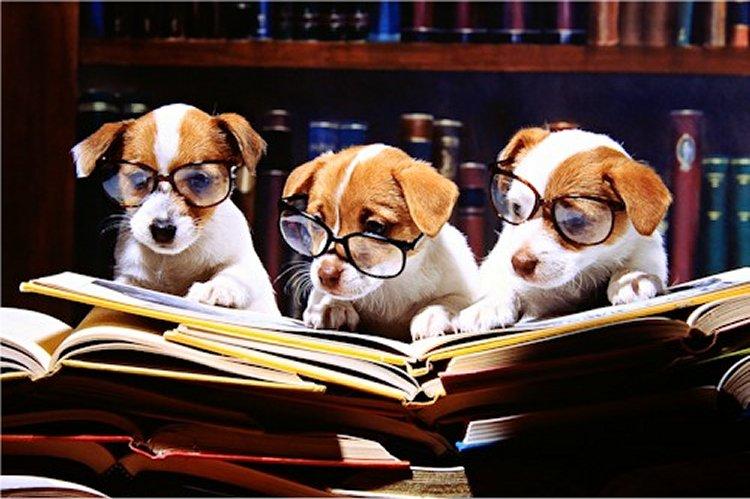 cachorros-com-seus-livros-19