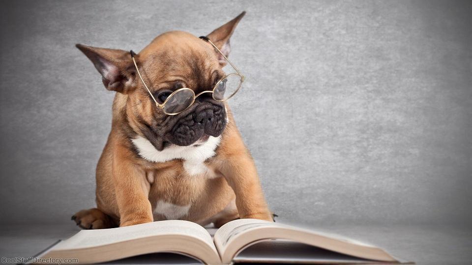 cachorros-com-seus-livros-20
