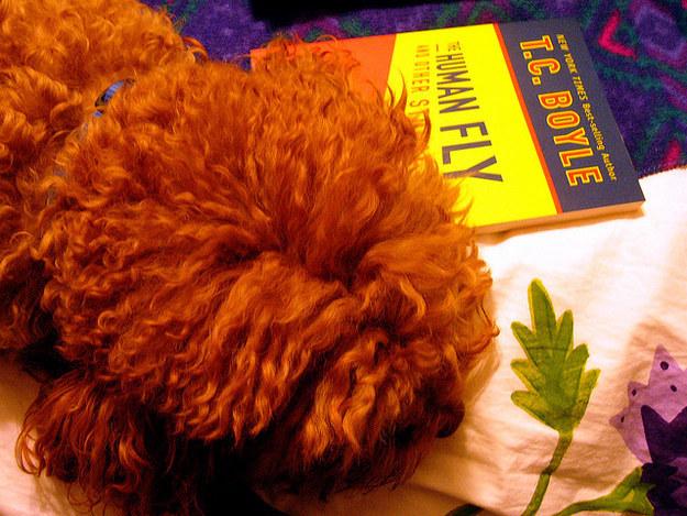 cachorros-com-seus-livros-5