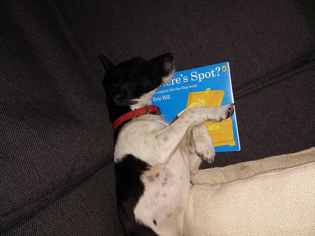 cachorros-com-seus-livros-6