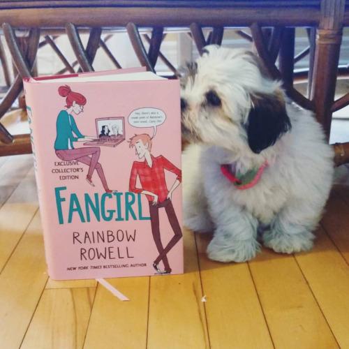 cachorros-com-seus-livros-7