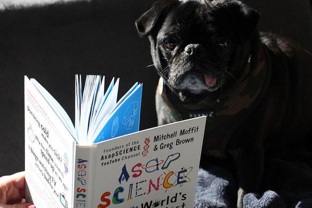 cachorros-com-seus-livros-9