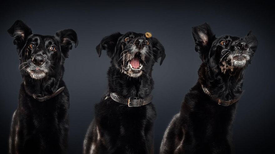 cachorros-famintos-10