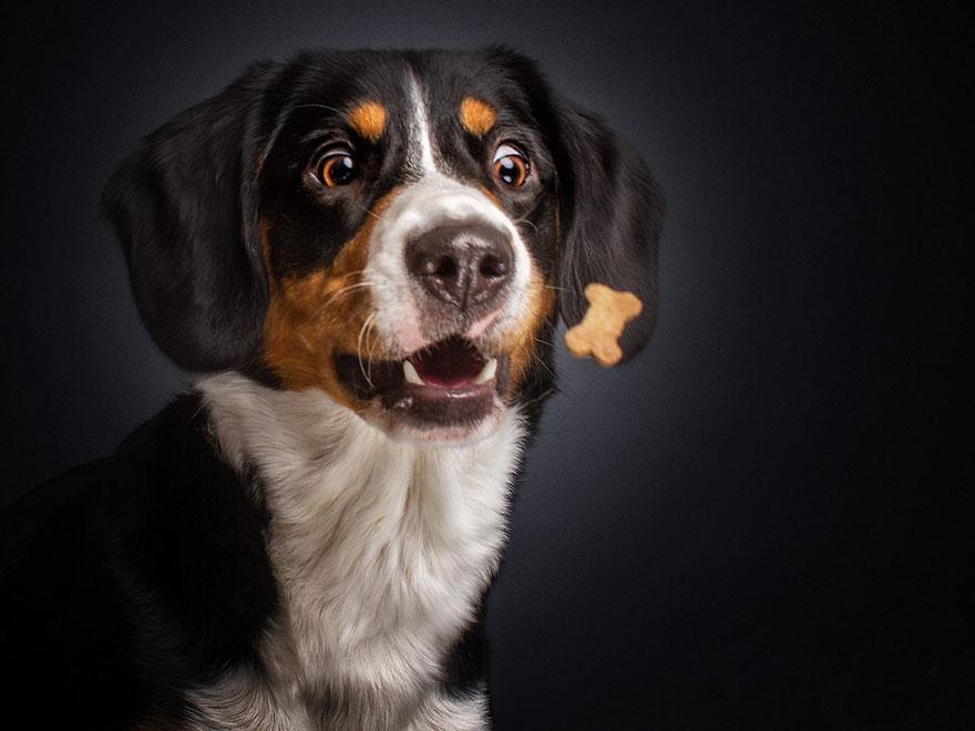 cachorros-famintos-5