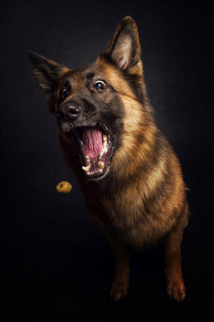 cachorros-famintos-7