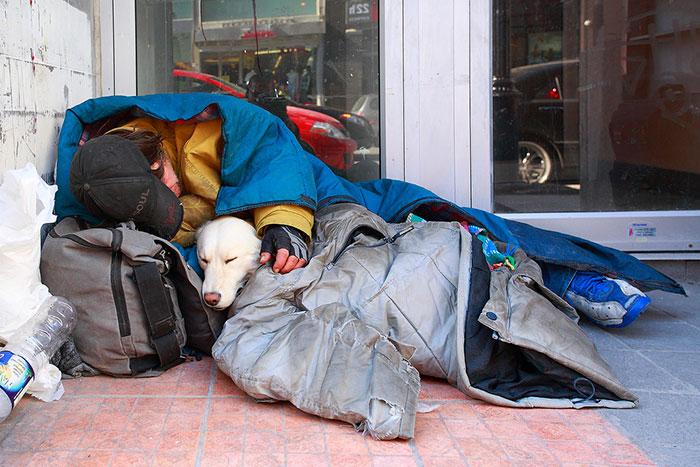 cachorros-que-amam-os-donos-independente-de-dinheiro-13