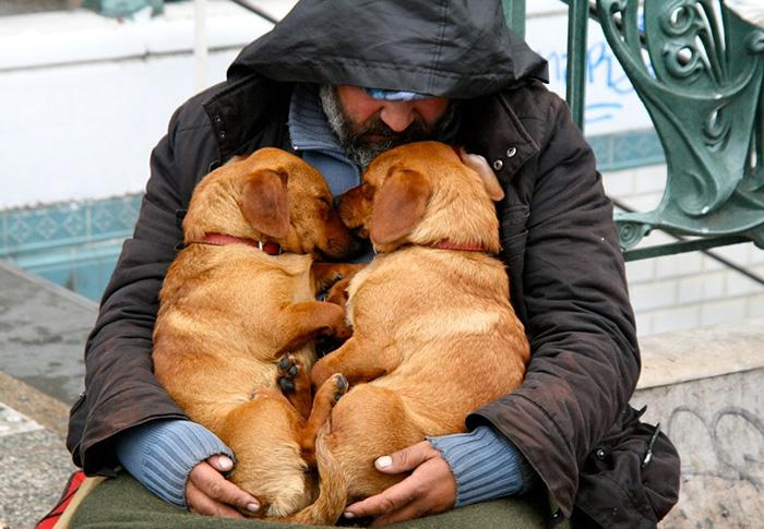 cachorros-que-amam-os-donos-independente-de-dinheiro-15