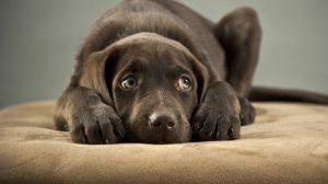 coisas-que-seu-cachorro-não-gosta-que-você-faça
