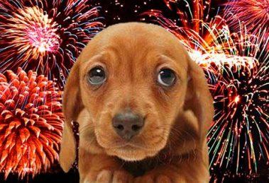 como-proteger-seu-cao-do-barulho-dos-fogos-de-artificio