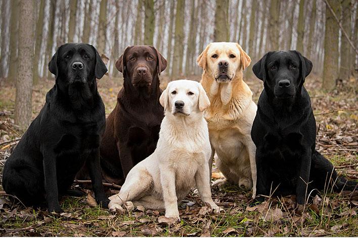 raças-de-cães-mais-inteligentes-do-mundo-5