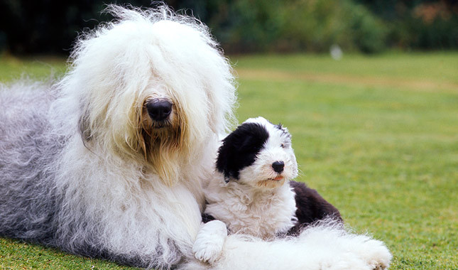 perros tranquilos