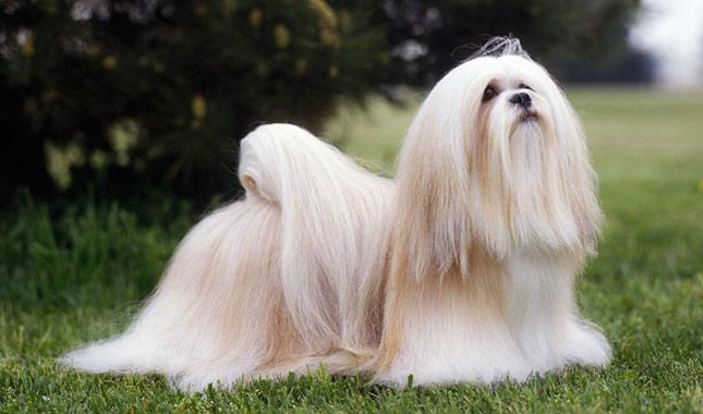 perro adorable