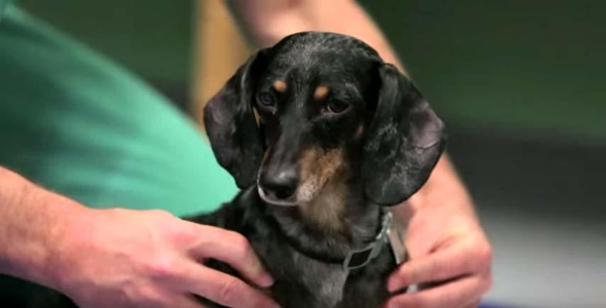 cachorro-abandonado-com-paralisia-adotado-1