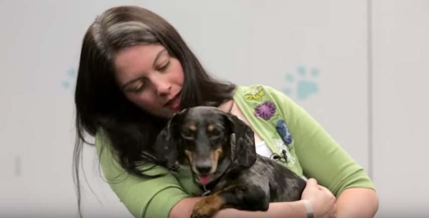 cachorro-abandonado-com-paralisia-adotado-5