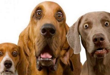cachorro-assustado-causas-e-dicas