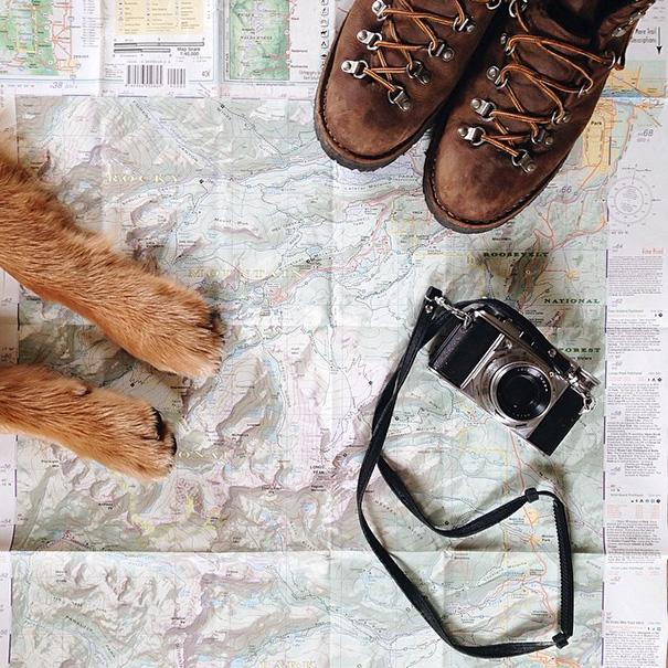 cachorro-aventureiro-10