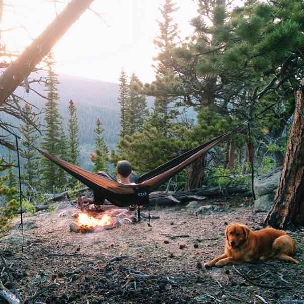 cachorro-aventureiro-11