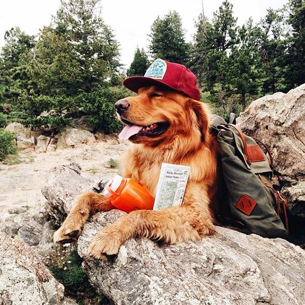 cachorro-aventureiro-15