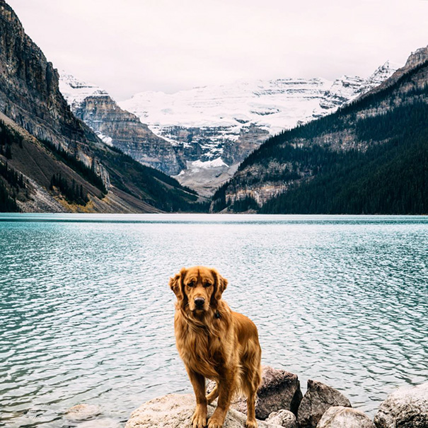 cachorro-aventureiro-4