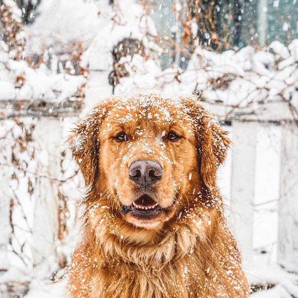 cachorro-aventureiro-5