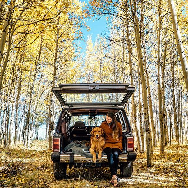cachorro-aventureiro-7