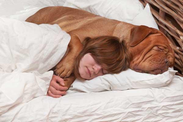 cachorro-dormindo-na-cama-do-dono