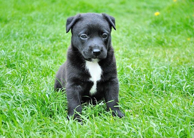 cachorro-no-gramado-cuidados-com-filhotes