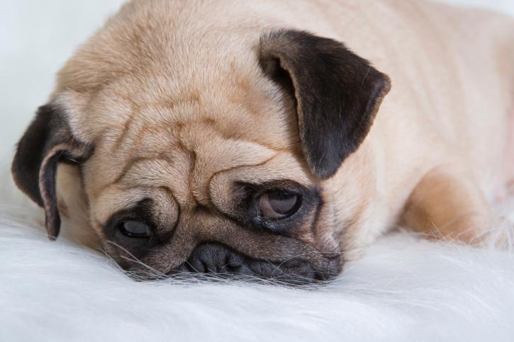 Sad Puppy Dog Images