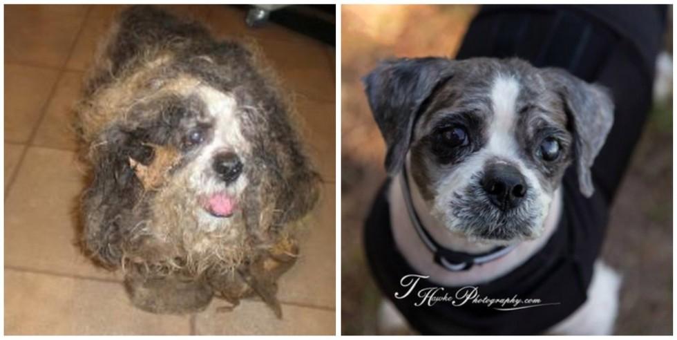 cachorros-antes-e-depois-de-adotados-10