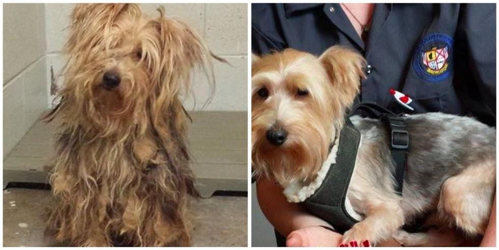 cachorros-antes-e-depois-de-adotados-21