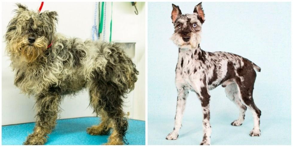 cachorros-antes-e-depois-de-adotados-8