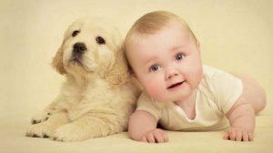 cachorros-com-bebês-1