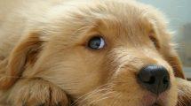 cachorros-com-personalidade-forte
