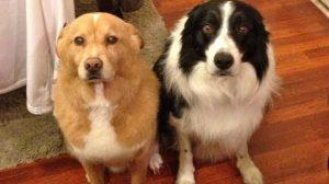 cachorros-culpados