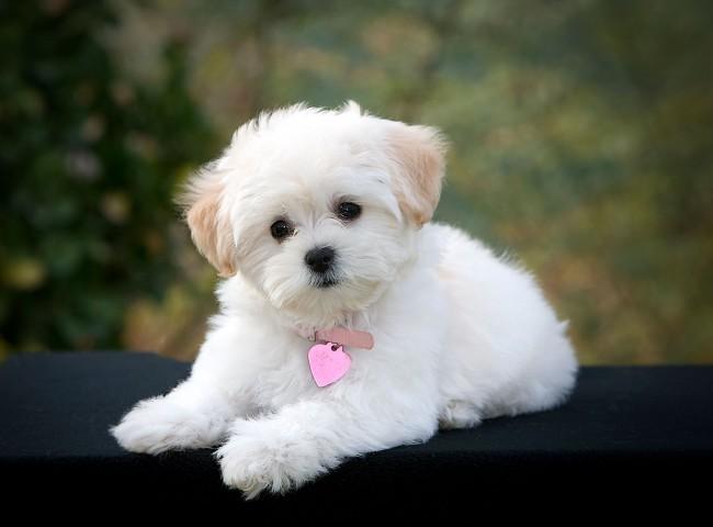 cachorros-de-pequeno-porte-6