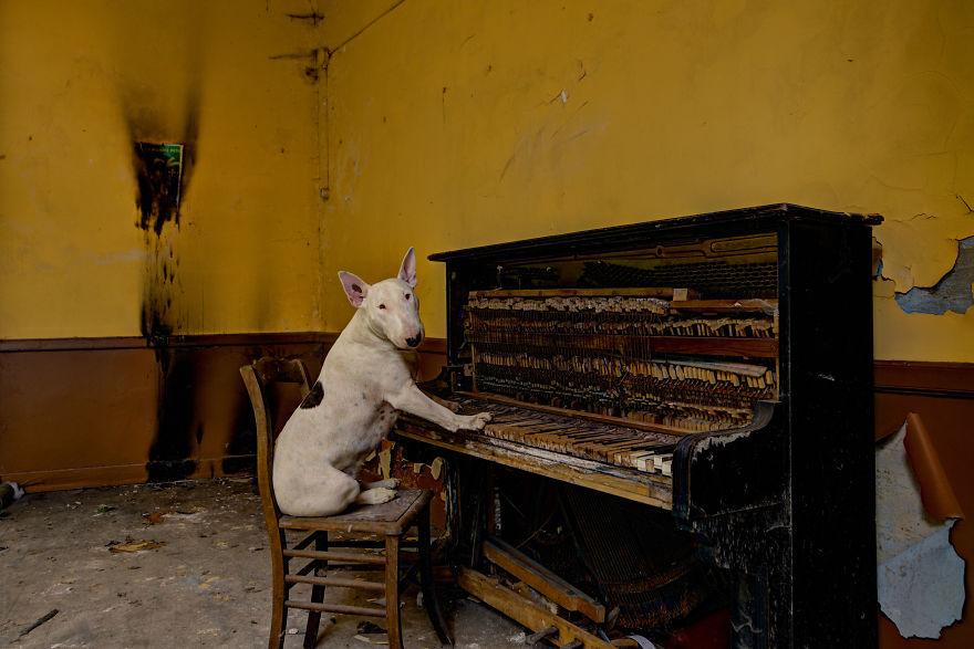 cachorros-e-dono-exploram-lugares-abandonados-da-europa-10