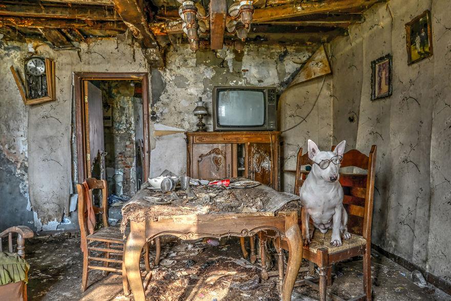 cachorros-e-dono-exploram-lugares-abandonados-da-europa-13