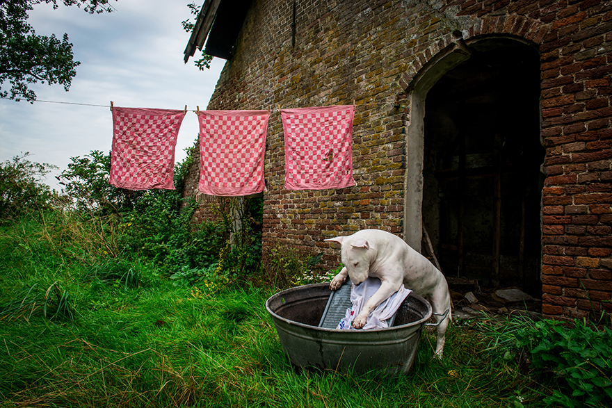 cachorros-e-dono-exploram-lugares-abandonados-da-europa-19